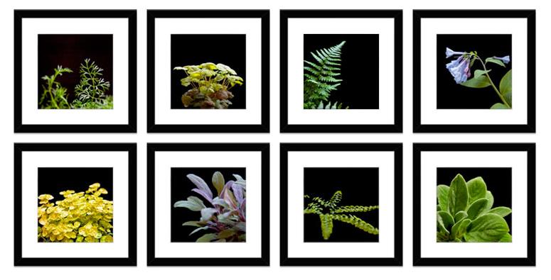 12 x 12 black gallery frames wmatte